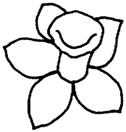 narciso-floreciendo