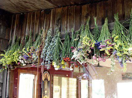 Cómo secar flores